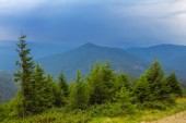 Beautiful mountain forest — Stock Photo