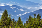 Beautiful mountain forest scene — Stockfoto