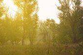 Am frühen morgen wald szene — Stockfoto