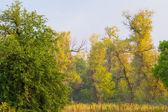 Aurumn forest — Stock Photo