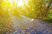 Güneşli bir sonbahar orman — Stok fotoğraf