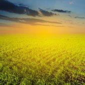 Green field at the evening — Stok fotoğraf