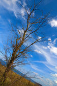 Dry tree in a steppe — Stock Photo