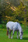 Białego konia na pastwisku — Zdjęcie stockowe