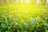 Forest glade in a rays of sun — Stock Photo