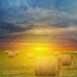 Wheat fiel after a harvest at the sunset — Stock Photo #55887357