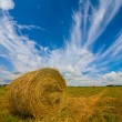 Wheat field after a harvest — Stock Photo #55888211