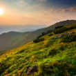 Green mountain valley at the sunset — Stock Photo #55889531