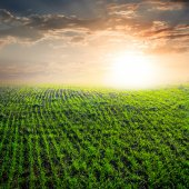 Dramatic sunset over a rural fields — Stockfoto