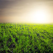 Green field at the early morning — Stock Photo