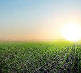 Green rural field at the early morning — Stock Photo