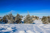 Snowbound winter forest — Stock Photo