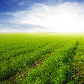 Green rural field at the morning — Foto Stock