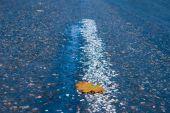 Closeup dry leaf — Zdjęcie stockowe