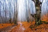 Jesień las mglisty — Zdjęcie stockowe