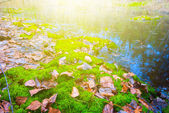 Green forest glade — Stock Photo