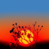 Closeup branch on a sunset background — Stock Photo
