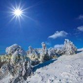 Winter snowbound forest under a sparkle sun — Stock Photo