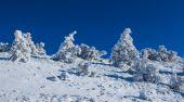 Winter snowbound forest scene — Stock Photo