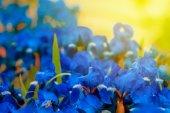 Blue closeup flowers — 图库照片