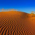 Hot sand desert scene — Zdjęcie stockowe #65146813