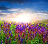 Hermosas flores en rayos de sol — Foto de Stock