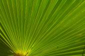 Closeup palm leaf — Stock Photo