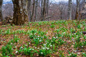 Spring forest glade scene — Stock Photo