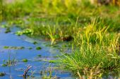 Green flooded field — Stock Photo