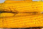 Closeup ripen corn — Stock Photo