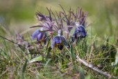 Beautiful closeup violet flowers — Stock Photo