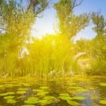 Summer lake scene — Stock Photo #73062865