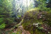 Sunny forest scene — Stock Photo