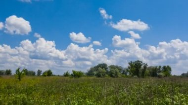 Yaz yeşil alanlar ve bulutlar — Stok video