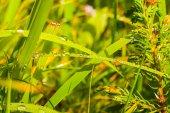Closeup hierba en un agua gotas — Foto de Stock