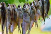 Closeup drying fish — Stock Photo