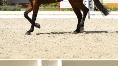 Dressage horse — Stock Video