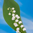 Lily of the valley on the blue sky — Stock Photo #59006387