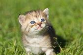 Baby kitten — Stock Photo