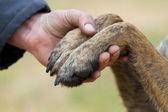 Human hand and dog paws — Stock Photo