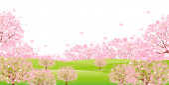 Cherry blossom background — Stock Vector