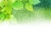 Leaf fresh green background — Stok Vektör