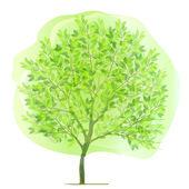 Tree fresh green background — Stock Vector