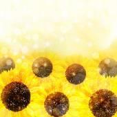 Sunflower flower background — Stock Vector