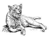 Original artwork old lioness, black sketch drawing animal — Stock Vector