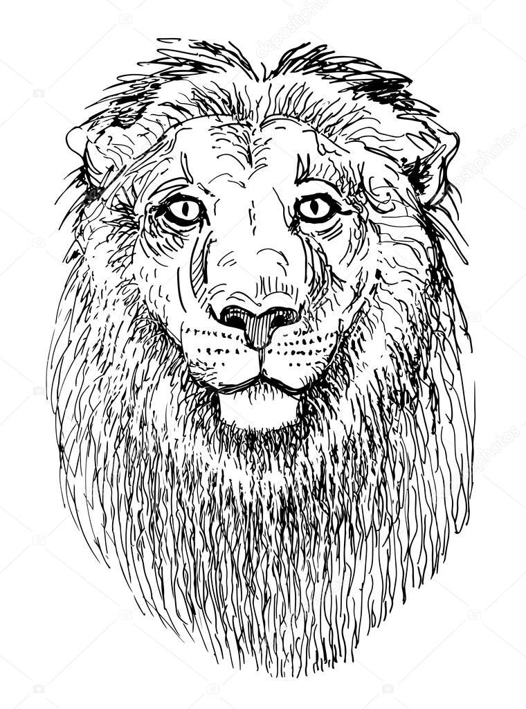 图稿狮子的头动物黑白素描