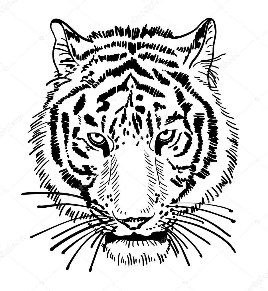Line Drawing Of Tiger Face : Opera di tigre ritratto del viso testa sagoma schizzo