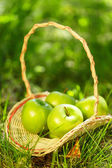 Basket with green apples — Stock fotografie