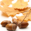 Fresh acorn with leaves — Stock Photo #57801249