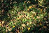 Autumn foliage on green grass — Stock Photo